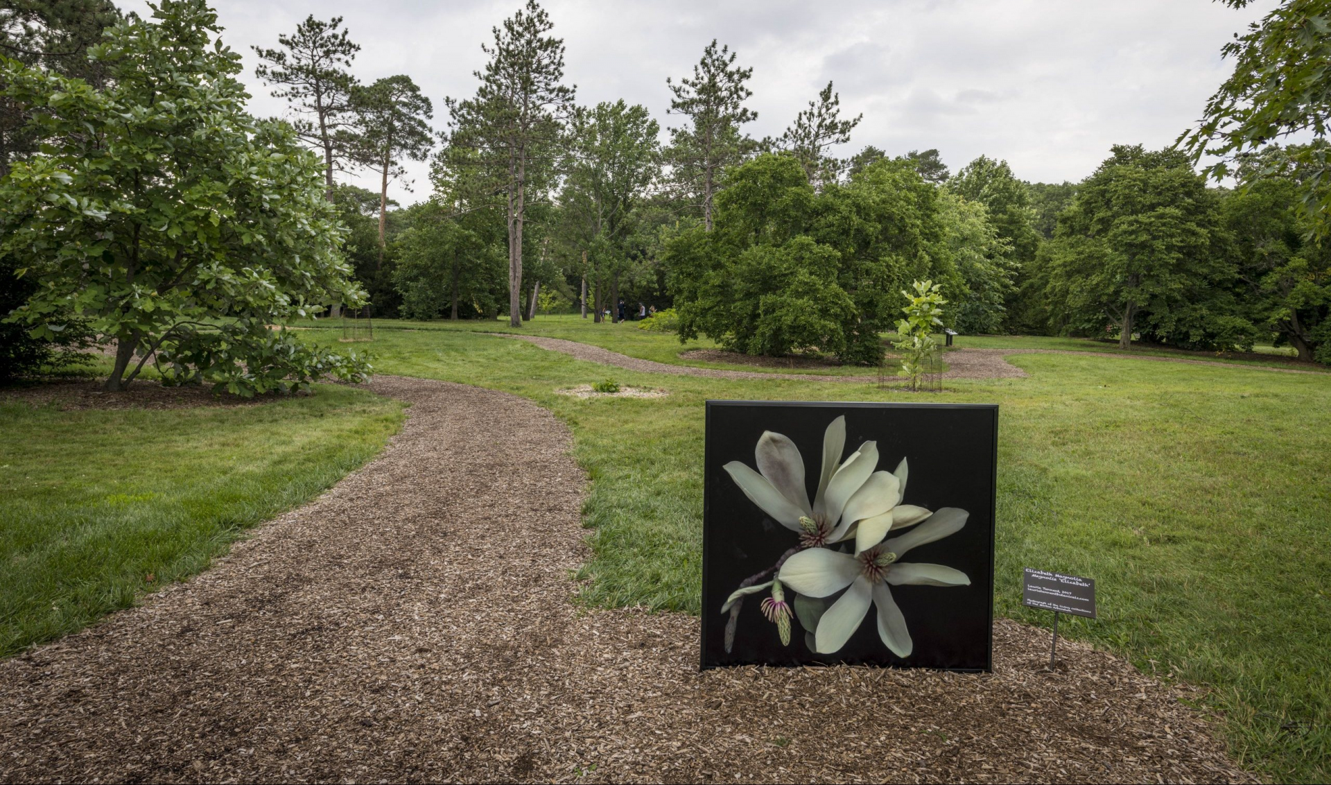 Magnolia collection in summer, featuring a photo installation by Laurie Tennent.