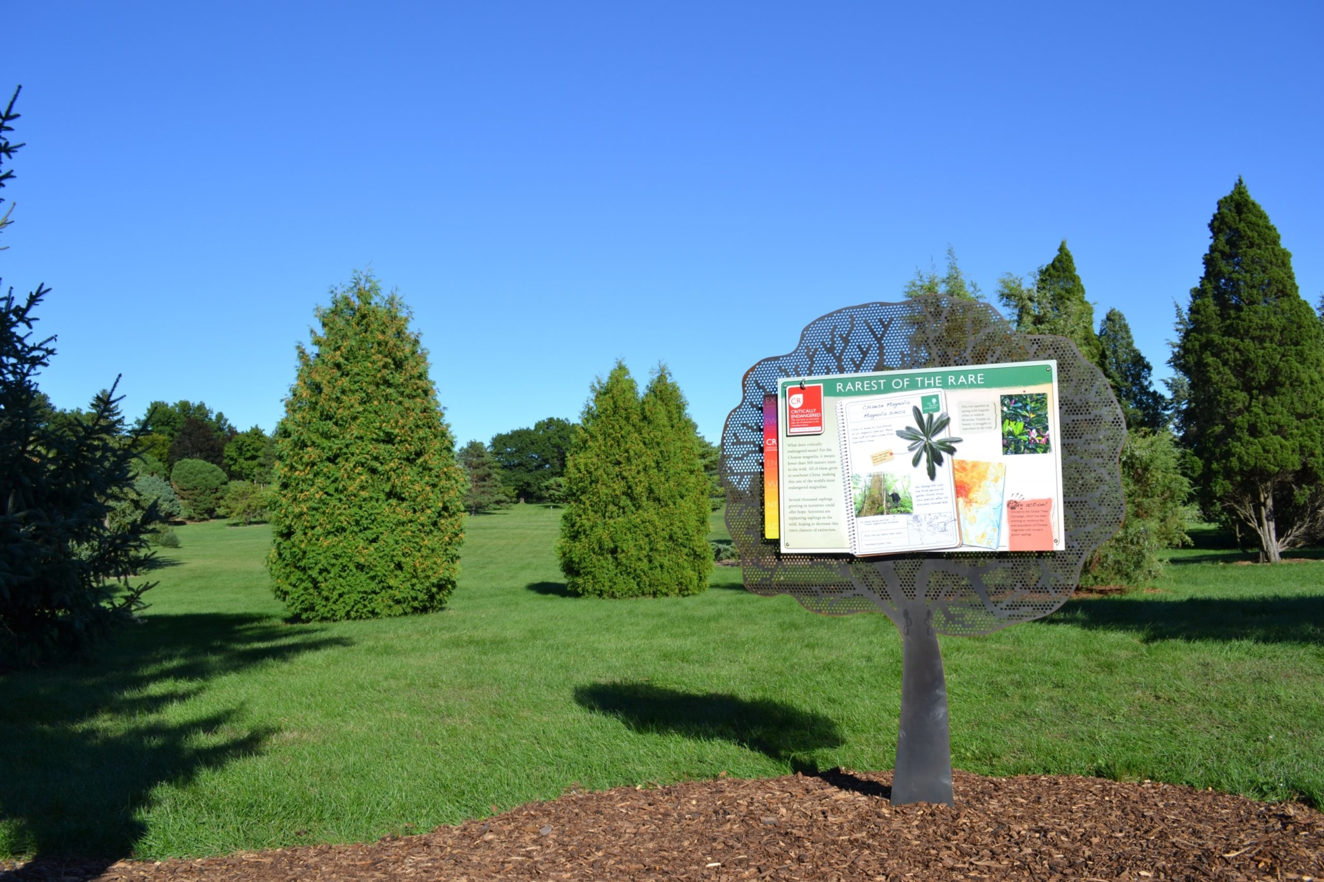 An interpretive panel of information about endangered trees in The Morton Arboretum's Vanishing Acts exhibit.